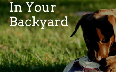 Steps To Have An Organic Healthy Lawn In Your Backyard
