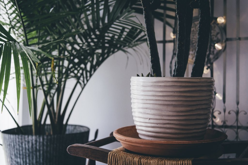 indoor plants you should try mommy rockin in style mommy bloggers ph mommy bloggers philippines
