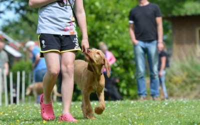 In Good Hands: 7 Qualities Only the Best Dog Trainers Posses